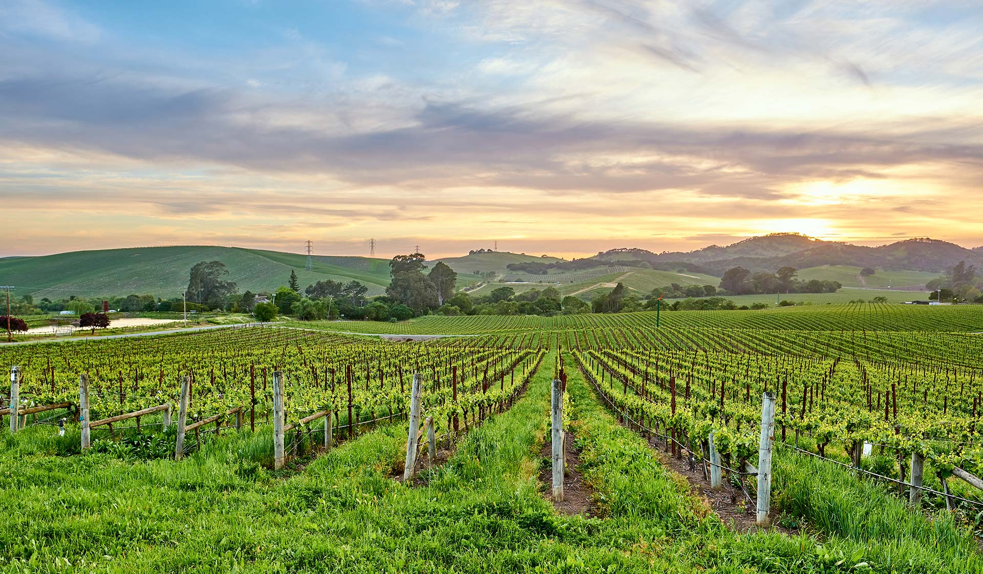Malibu Canyon - Calabasas, CA - Vineyard